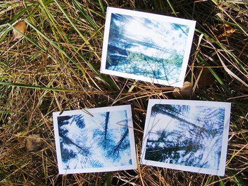 polaroid pinhole images