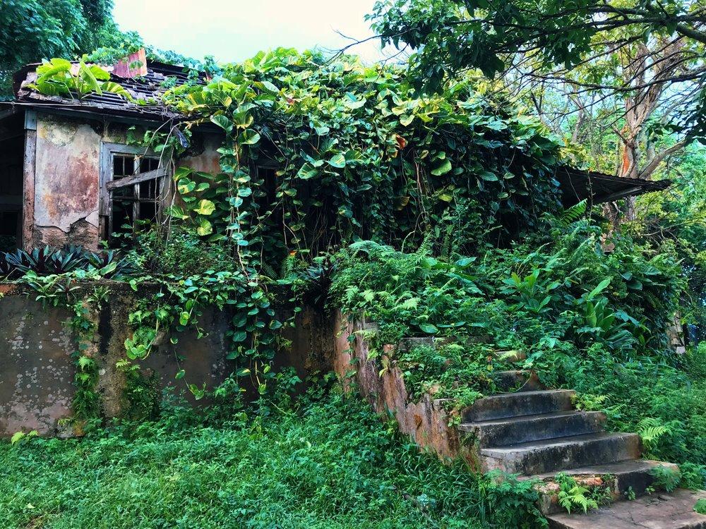 CHALKY HILLSAINT ANN, JAMAICA -