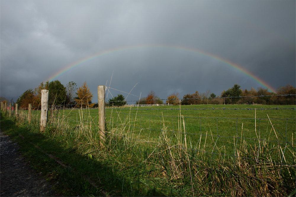 Grangemockler Rainbow I