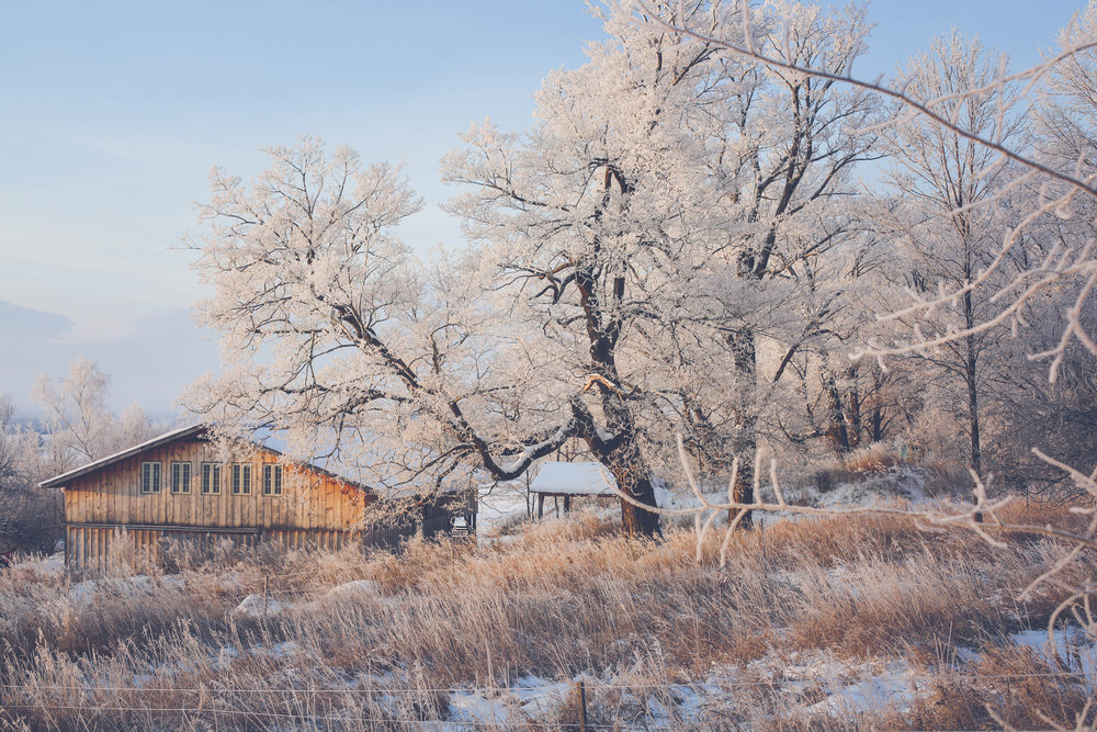 Multi-functional processing barn and root cellar in December