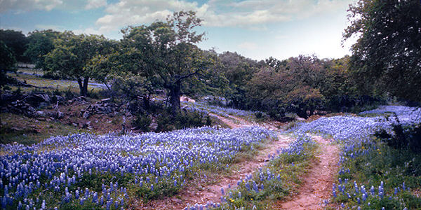 The Bluebonnet Trail Full Moon Inn Bed And Breakfast