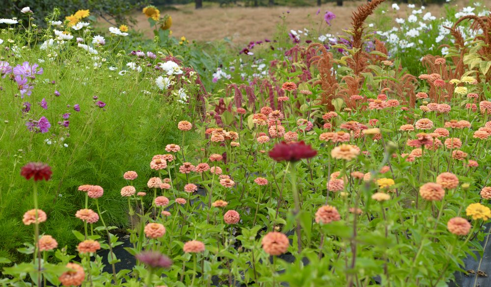Hopefully this will give you some ideas so that you can start thinking about planning your own cut flower garden as the weather hopefully starts to warm up in the next few weeks.