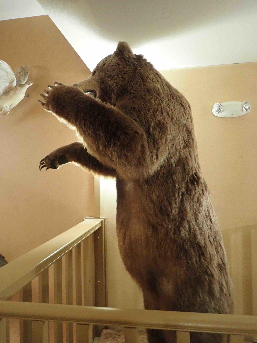 Granzella's bear.jpg