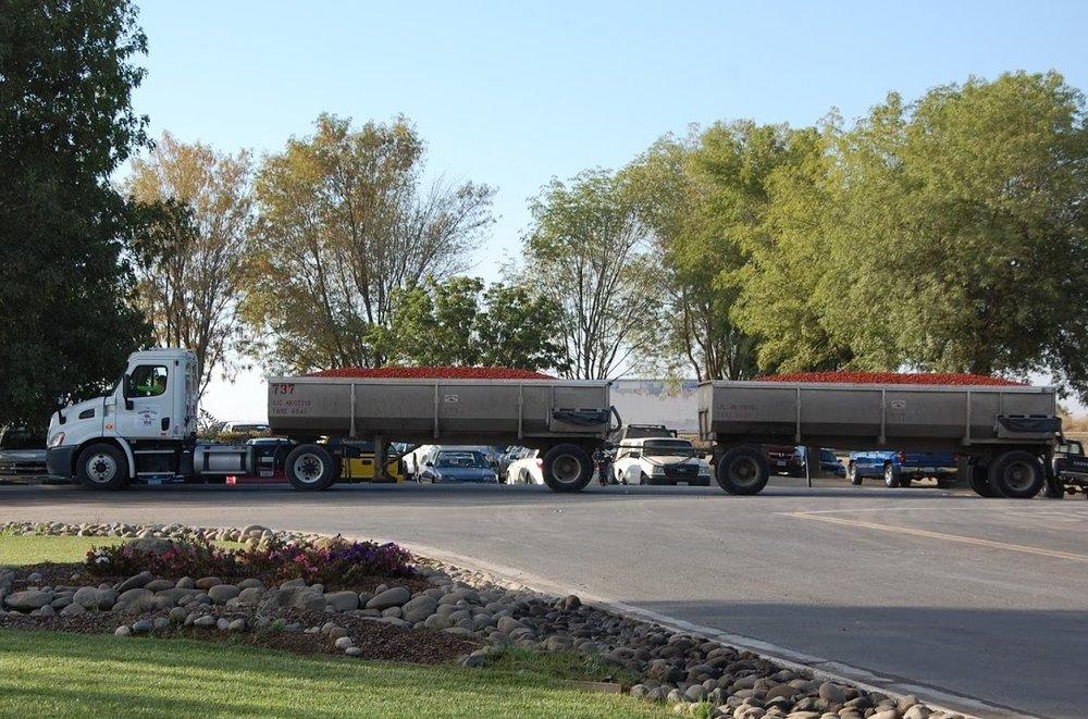Morningstar tomato trucks copy.jpg