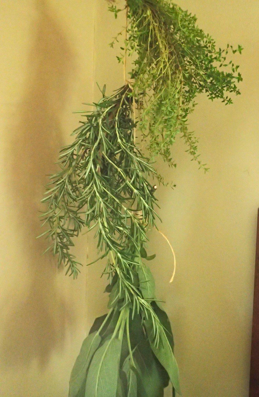 dried herbs.jpg