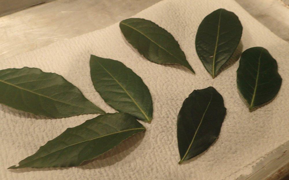 bay leaves.jpg