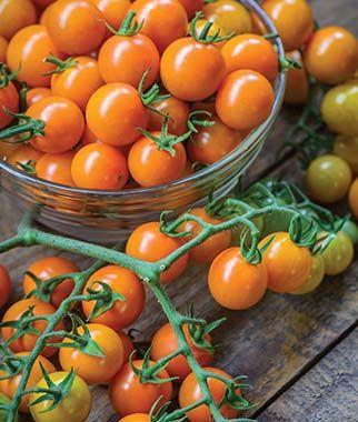 Burpee Tomato Honeycomb.jpg