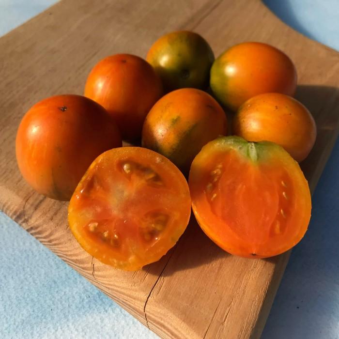 HV tomato Apricot zebra.jpg