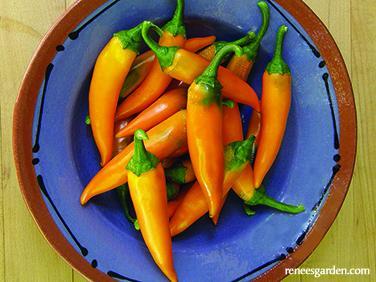 Renee's pepper chile-bulgarian-carrot.jpg
