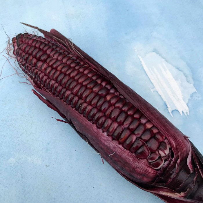 HV corn double red.jpg