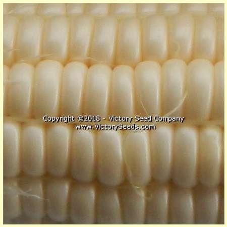 Victory corn Six Shooter.jpg