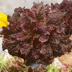 Rohrer lettuce Red Centennial.jpg