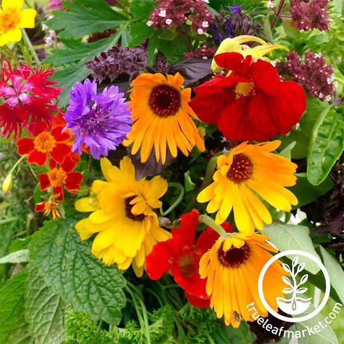 MV edible-flower-mix-grown.jpg