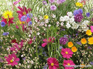 Renee's beekepers-mix-early-blooming.jpg