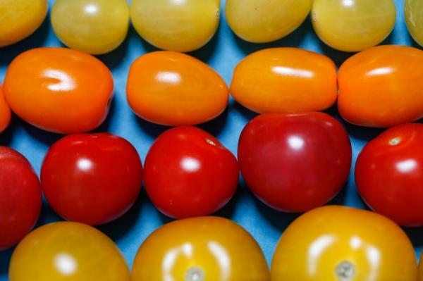rainbow tomatoes.jpg