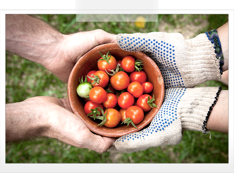giving-bowl-tomatoes.png