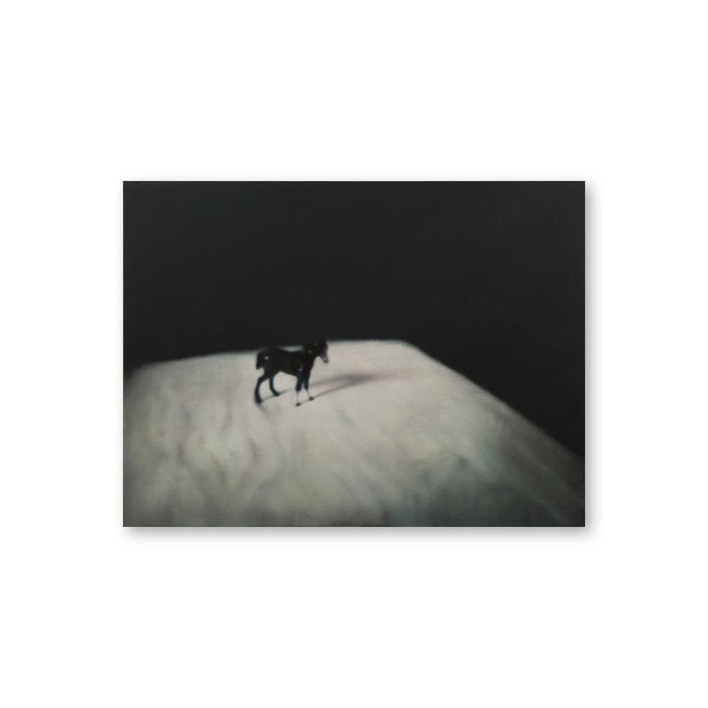 Helen_K_Main_Carousell_(1296x1296)201738 Foal.jpg