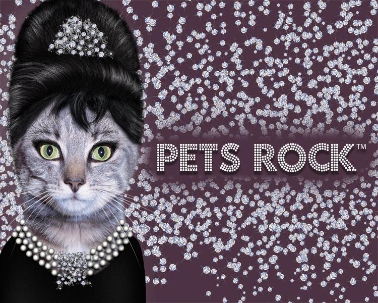 PETS ROCK.jpg