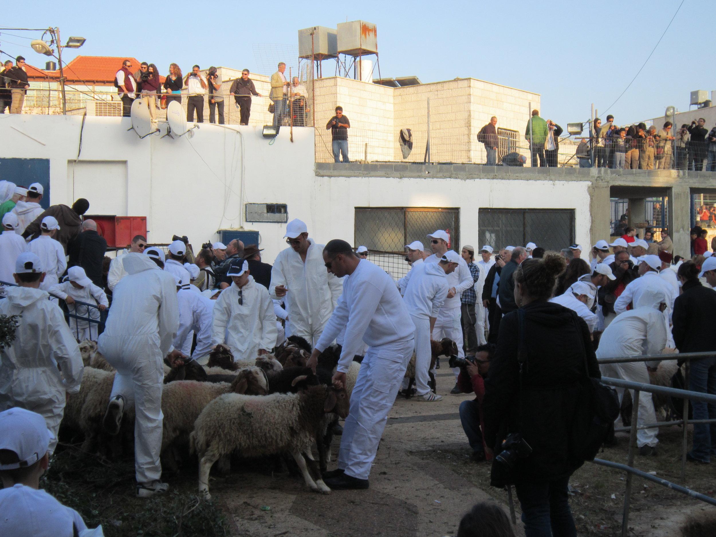 Preparation for sacrifice on Mt. Gerazim