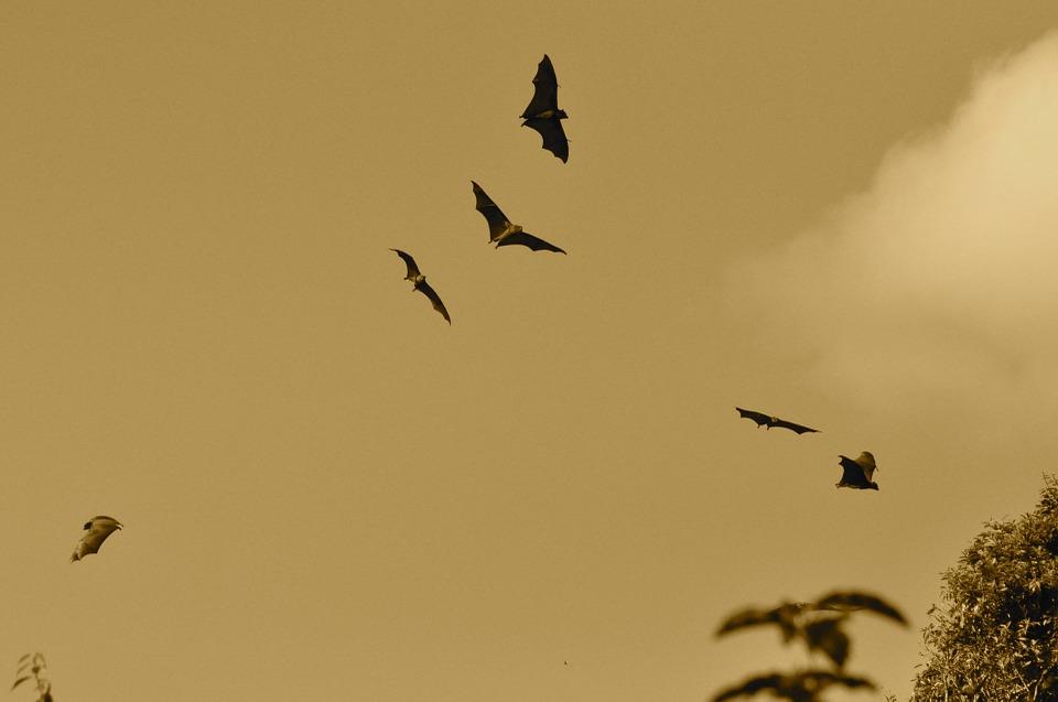 bats-164210_960_720