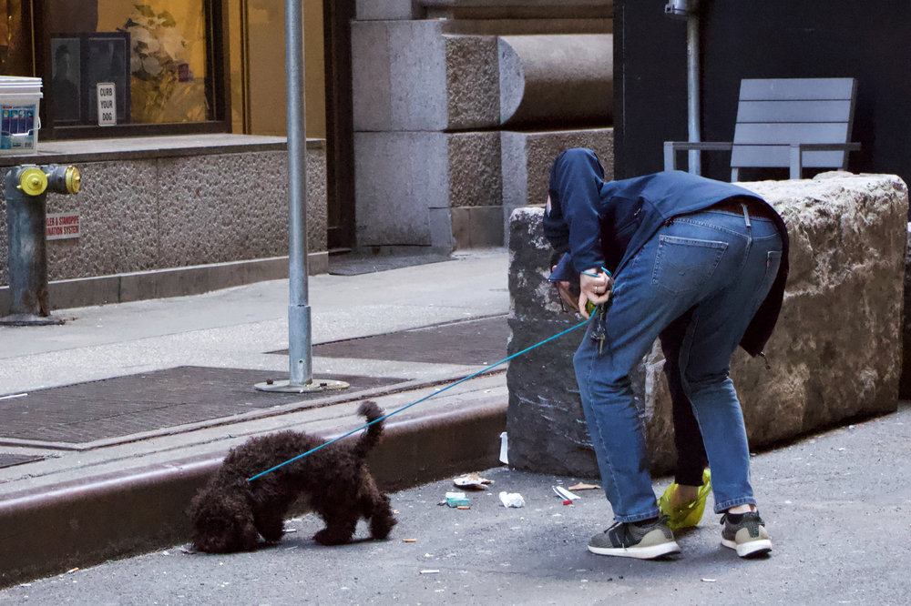 """Man picks up his dog's feces on Exchange Place. Rise in residents on the street have led to more dogs seen on the street. There are signs on the street that say """"Curb Your Dog."""" 