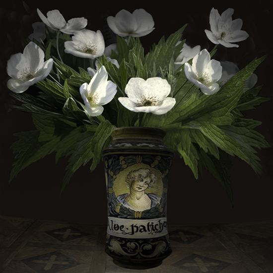 "Still life with white Anemone Canadensis in an Italian pharmaceutical vessel"", 2017 (Vase courtesy of the Royal Ontario Museum), 40""X40"", limited edition, archival pigment print. - The pharmaceutical jar was photographed by TM Glass with permission from the Royal Ontario Museum. The anemone flowers came from the artist's garden."