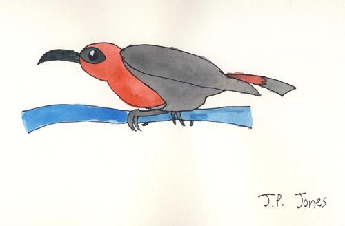 jpjbird2.jpg