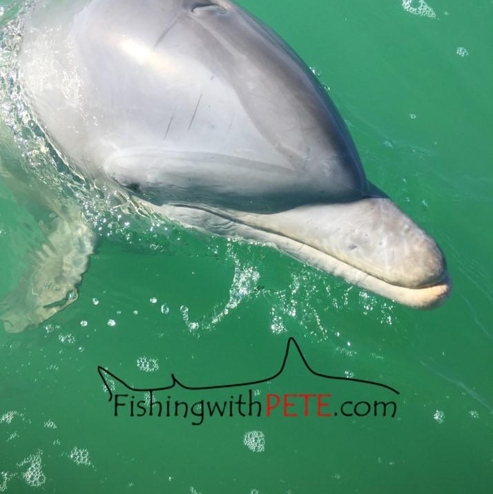 Logo Dolphin1.jpg