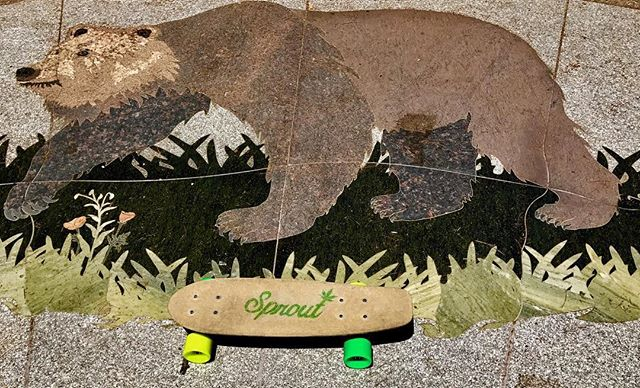California's own Hemp Plastic-Alternative ✌️ #sustainable #hemp #skateboard #california