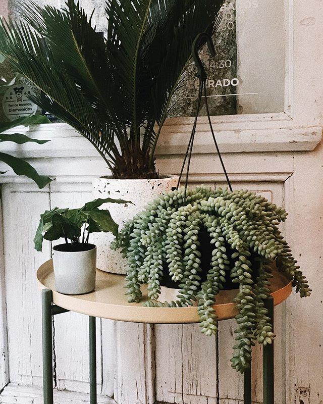 Y sí, aparte de nuevas plantas, nuevos productos y nuevos cursos para esta nueva temporada, también hoy  volvemos a nuestro horario de invierno.  Martes a sábado de 10:30-14:00 y de 17:00 a 20:30. Domingos de 10:30 a 14:30. Lunes cerrado.  F : @antp  #plantsmakepeoplehappy #planthaemakepeoplehappy #plantshop #plants #pottery #madrid