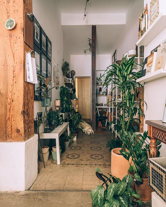 Y sí, la hora a cambiado y el Invierno ya ha llegado , así es tiempo de hacer de nuestros hogares lugares perfectos y llenos de plantas  interior punto para disfrutar de ellos y esperar la Primavera.  Así que, si necesitas asesoría botánica, buscas maceteros bellos o quieres un proyecto de paisajismo. Escríbenos o ven a visitarnos a nuestro pequeño gabinete  de Doctor Fourquet!! #planthae #reentree #proyectosbotanicos #asesoria #madrid  Foto : @estudiorotula