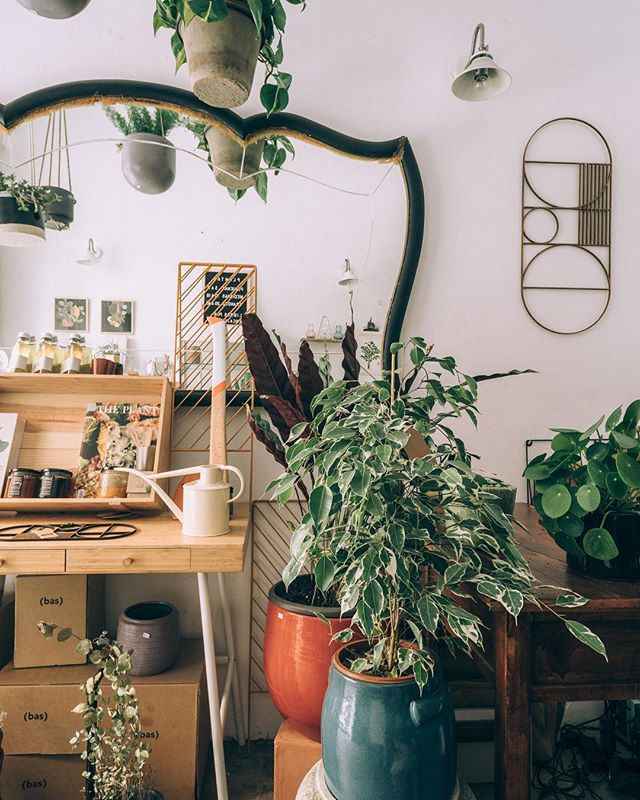 Esto son nuestros rincones,  Estas son nuestras plantas. Esto es PLANTHAE  #plantshop #plantcorner #plantsmakepeoplehappy #gabinetebotanico #planthae #madrid #rincones #otoño #lluvias  F: @estudiorotula