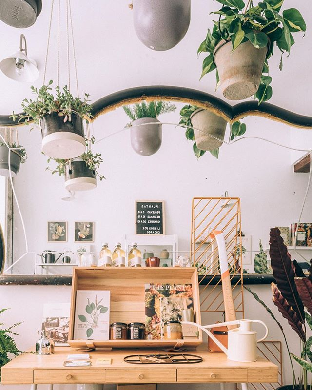 Y sí, aunque sea festivo, nosotros abrimos en nuestro horario habitual de 11:30 a 14:00 y de 17:00 a 20:30.  Además el sol ha salido, así que si queréis comprar una planta con un buen macetero para vuestro bello salón, ya sabéis #ahilodejo  #plantshop #plantsmakepeoplehappy #greendecoration #plants #pots #books #lavapies #madrid