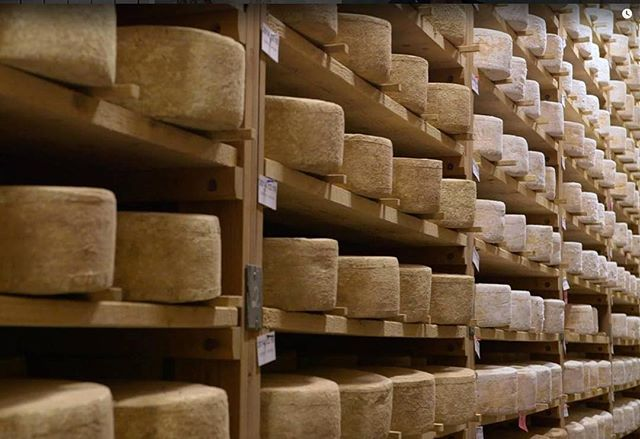 """~ Merit to the Master ~⠀ For over 40 years Will Studd has worked with, found, tasted, shared and advocated the best cheese and cheese makers the world has to offer. Forever the educator, teaching many the love of great cheese through various channels including the beloved """"Cheese Slices"""" TV program. ⠀ ⠀ This photo is from Season 8 of the show where he visits Jasper Hill Farm in Vermont. @jasperhillfarm⠀"""