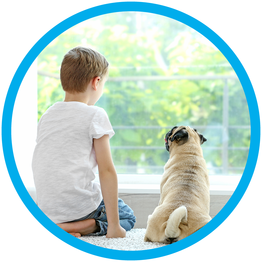 Boy and Dog looking out window on dry clean carpet
