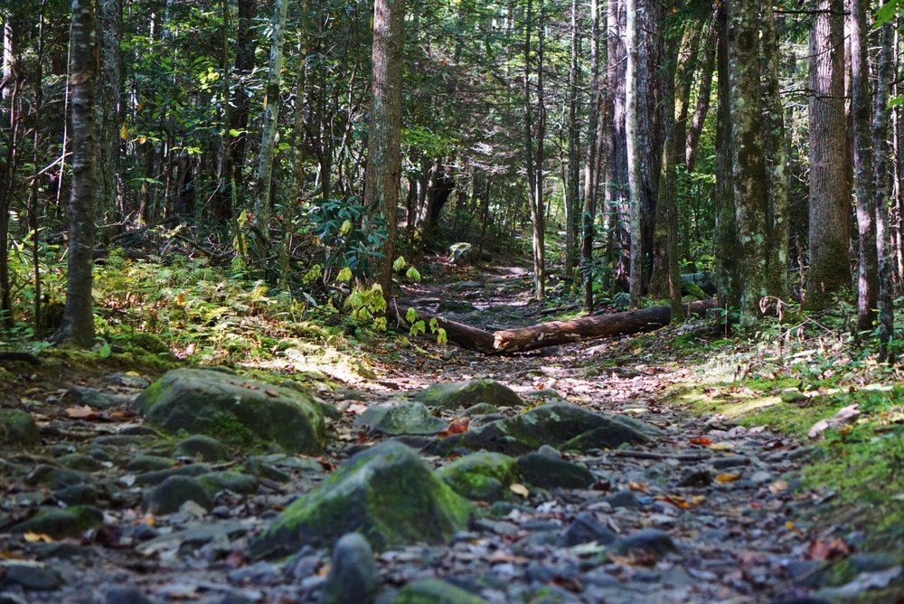 Let the journey begin…