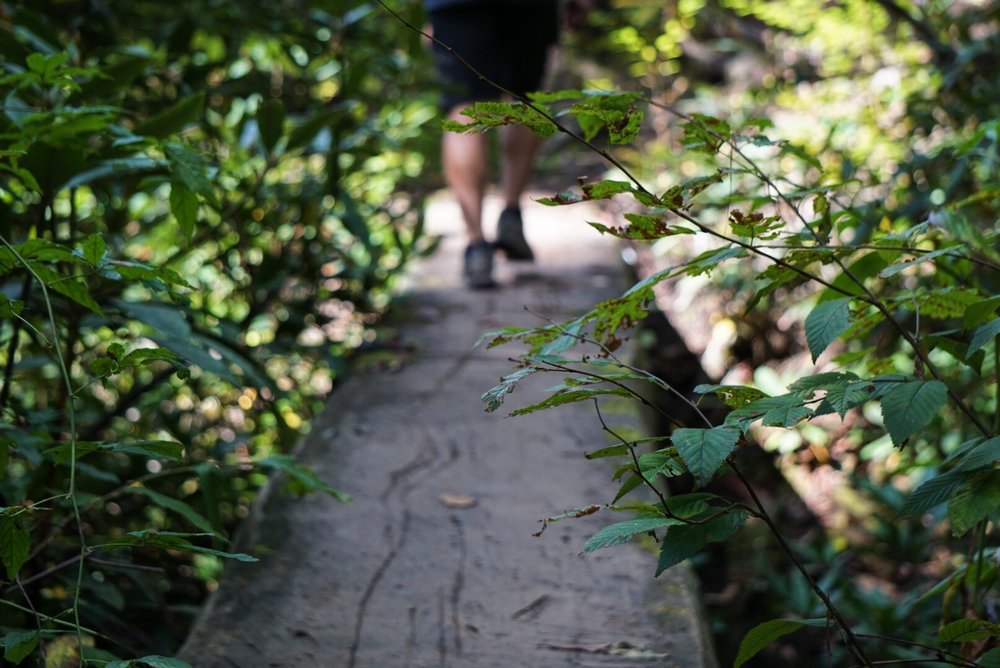 Walk the plank to no where…if you DARE!