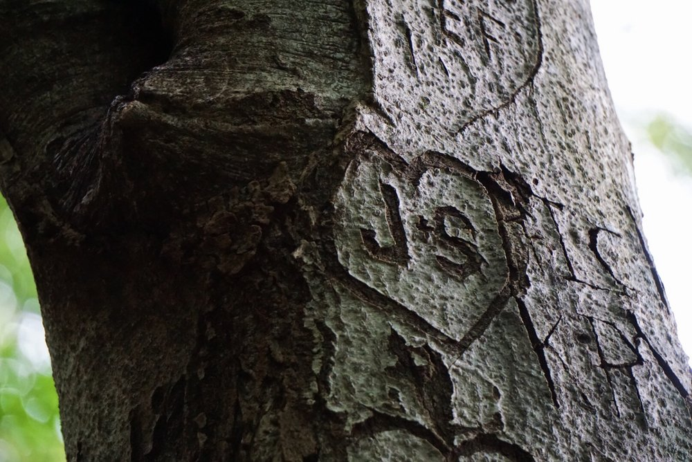 I promise it wasn't us who did this! We spotted this carving along our route & knew…it was meant to be! J&S foreverrrr! ♡