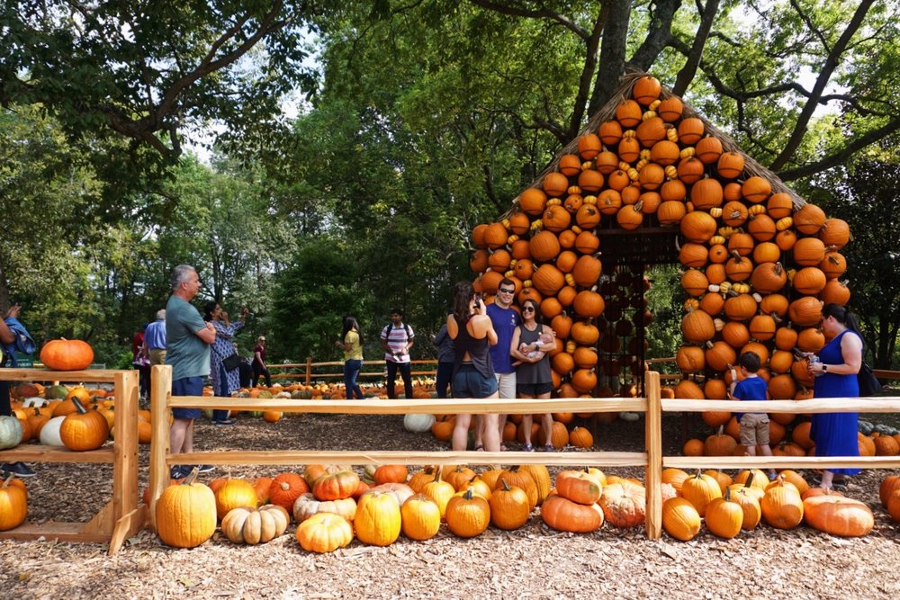 Pretty pumpkin house. :)