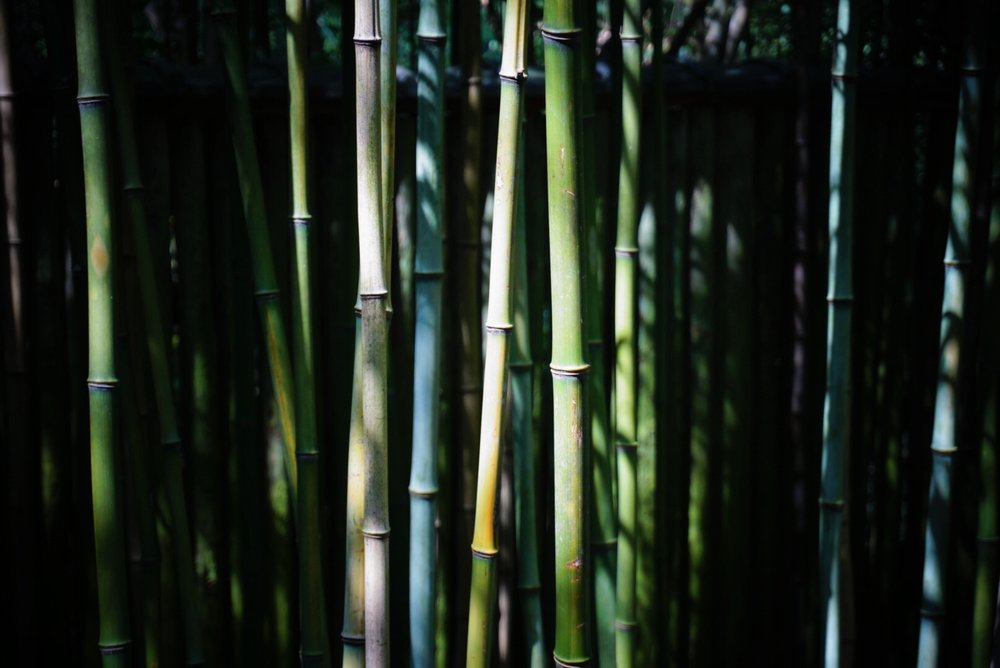 What a beautiful backdrop!