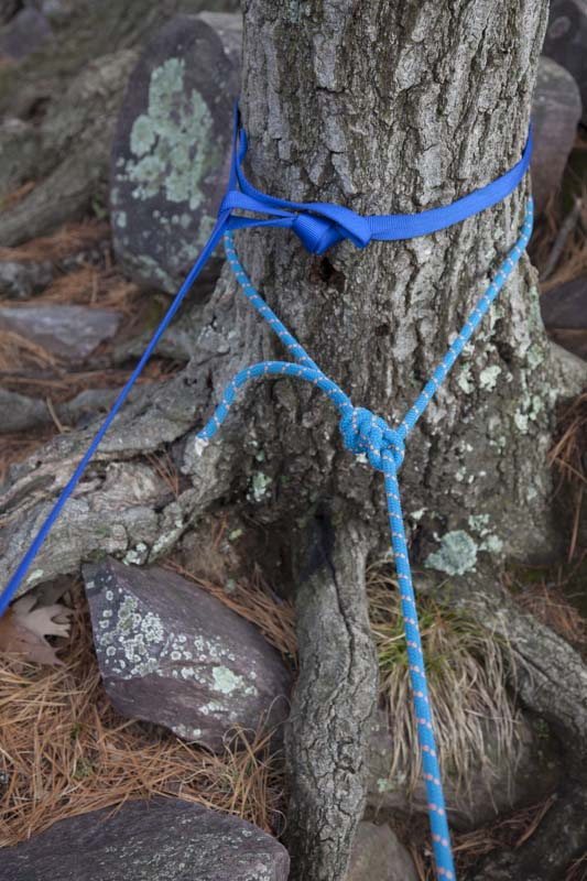 A girth hitch on webbing (above) and bowline on static line (below) secure rigging around a tree trunk.