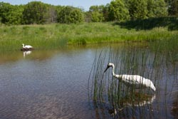 International Crane Foundation in Baraboo, WI