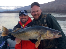 Walleye    February - March Rocky Reach Dam, Rock Island Dam and Wanapum Dam