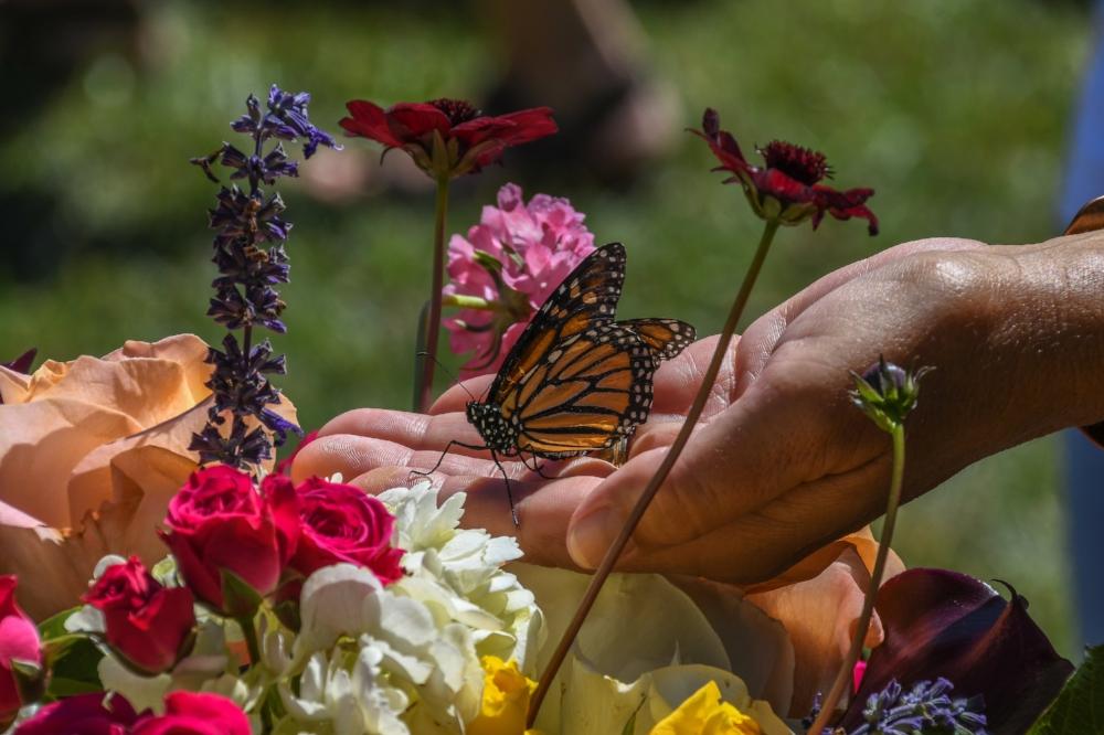 Buena Vista Butterflies 2016-217.jpg