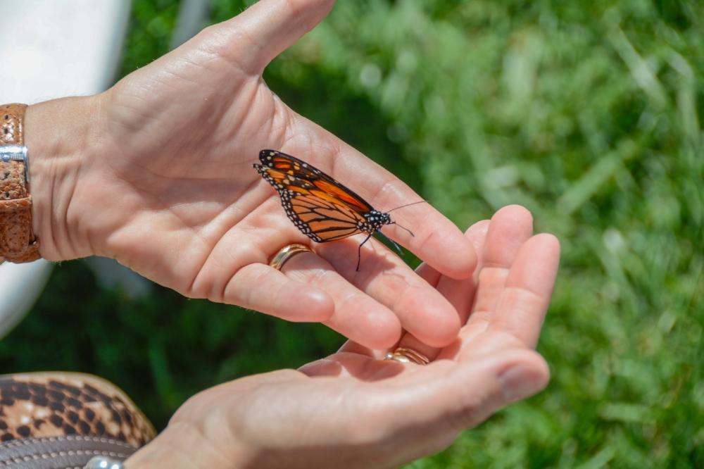 Buena Vista Butterfly Release 2014-17.jpg