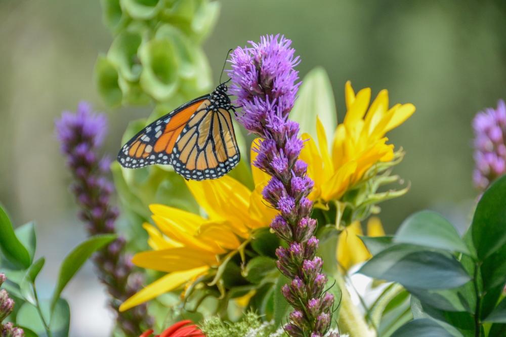 BV Butterfly Release 2015-98.jpg