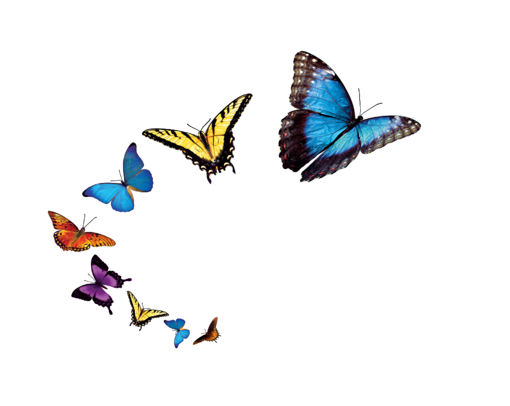 Buena Vista Home Health & Hospice