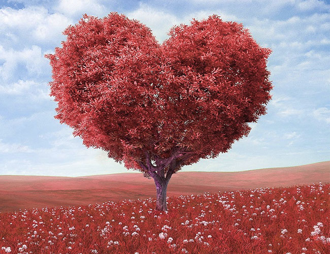 red heart tree.jpg