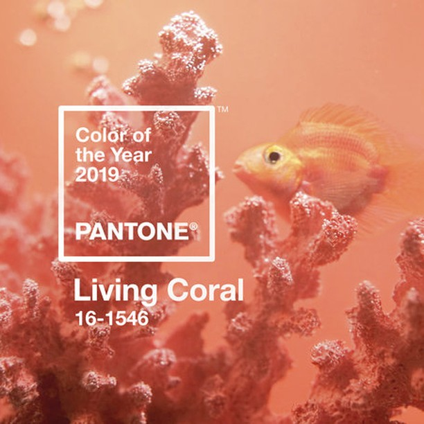 Inspiration // Interesting choice⠀⠀⠀⠀⠀⠀⠀⠀⠀ 📷: @Pantone #COY2019 ⠀⠀⠀⠀⠀⠀⠀⠀⠀ ⠀⠀⠀ ⠀⠀⠀ ⠀⠀⠀ ⠀⠀⠀ ⠀⠀⠀ ⠀⠀⠀ ⠀⠀⠀ ⠀⠀⠀ ⠀⠀⠀ ⠀⠀⠀ ⠀⠀⠀ ⠀⠀⠀ ⠀⠀⠀ ⠀⠀⠀ ⠀⠀⠀ ⠀⠀⠀ ⠀⠀⠀ ⠀⠀⠀⠀⠀⠀⠀⠀⠀⠀⠀⠀ #graphicdesign #designer #designerlife #coloroftheyear #pantone #colour #livingcoral #coral