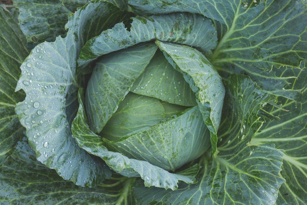 aspen larry macintyre catering organic